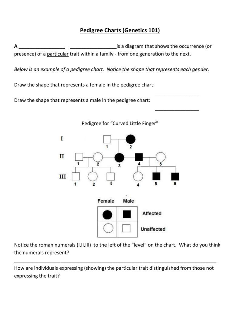 worksheet Pedigree Charts Worksheet pedigree charts genetics 101