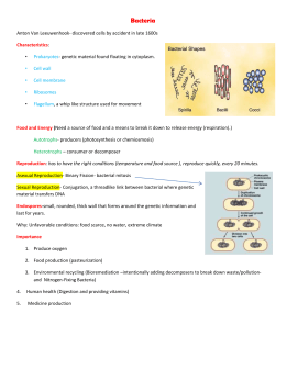 Bacteria Notes