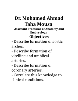 The aortic arches