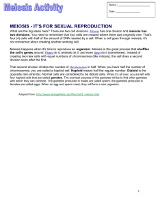 Snurfle Meiosis and Genetics 2 Worksheet