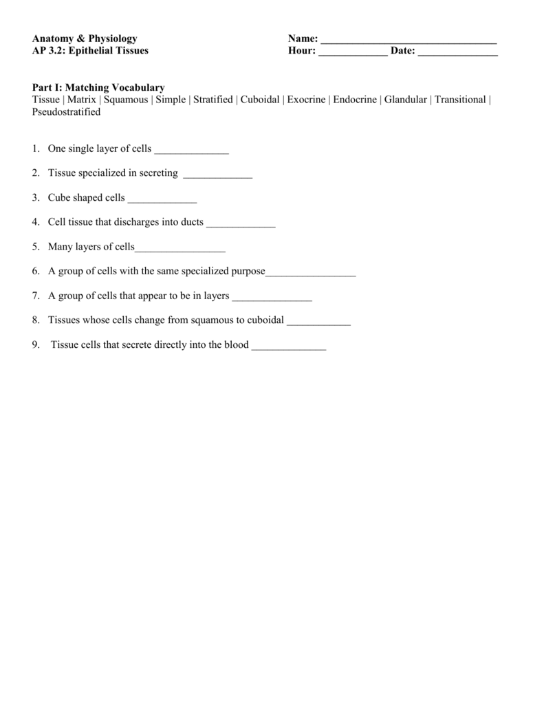 Anatomy Worksheet: Epithelial Tissues