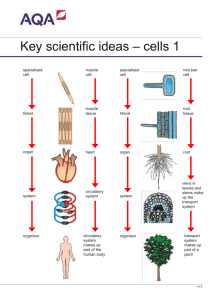 Specialised cells and tissues