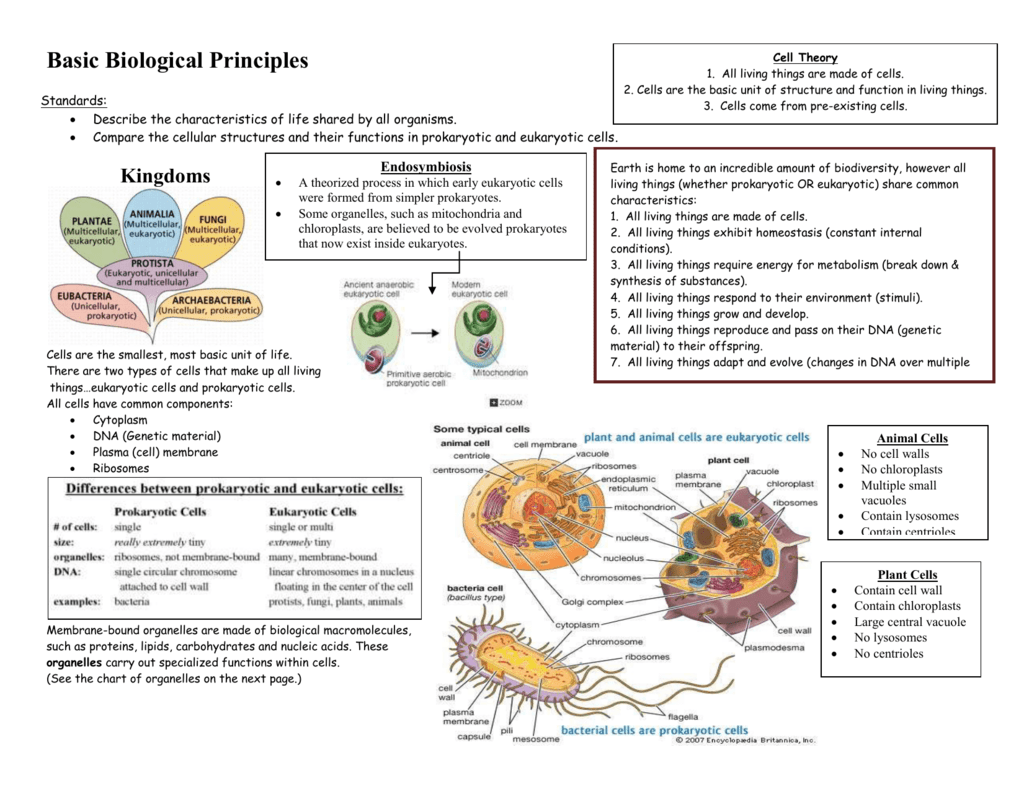 Basic biological principles study guide 1 pooptronica