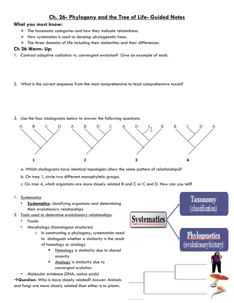 30 Phylogenetic Tree Worksheet High School - Worksheet ...
