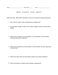 What Plants Talk About - Highline Public Schools