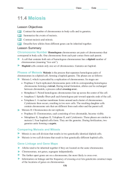 Chapter 11 4 Meiosis Worksheet - The Best and Most Comprehensive ...