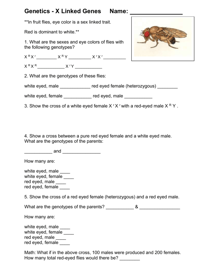 gene worksheet 3 dihybrid crosses: examining two separate traits at a time in a cross between two individuals this is how mendel developed his law of independent assortment.