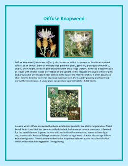Diffuse Knapweed - Johnson County Weed & Pest