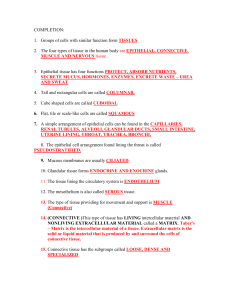 Tissue worksheet Name__________________ Section A: Intro to