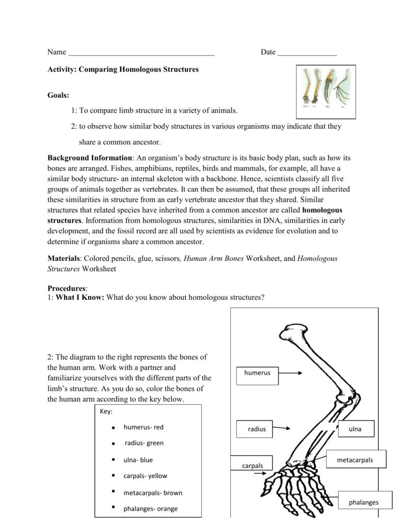homologous structures worksheet worksheets releaseboard free printable worksheets and activities. Black Bedroom Furniture Sets. Home Design Ideas