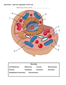 Directions: Label the organelles of the cell. What type of cell is this