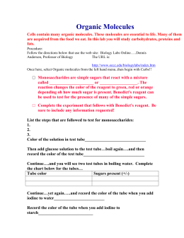 Biology lab report testing for macromolecules
