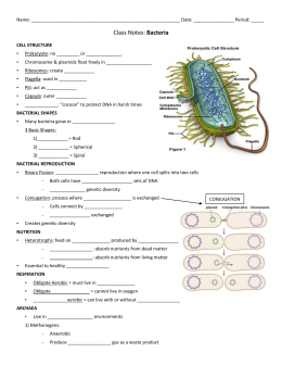 Life Cycle of Bacterial Wilt - Vegetable MD Online