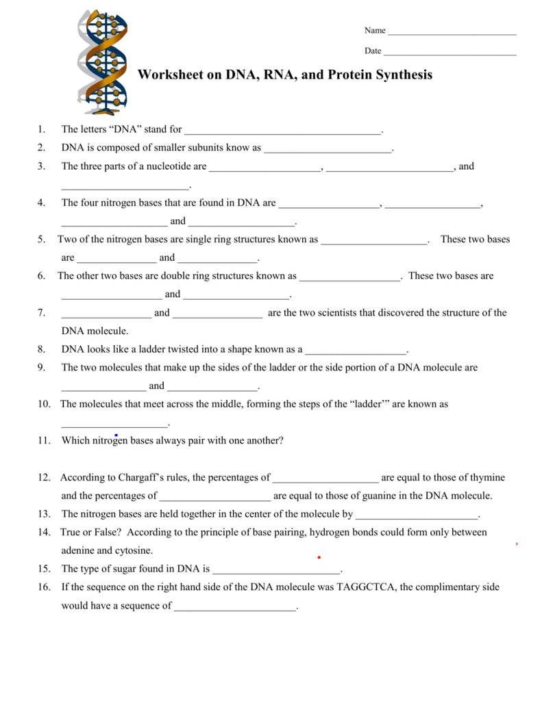 Worksheet on DNA and RNA