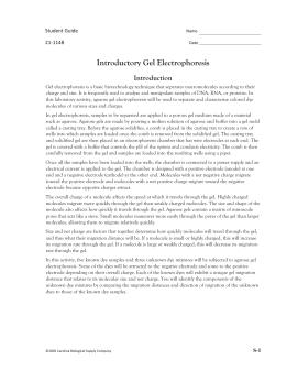 ap lab 6 essay gel electrophoresis