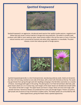 Spotted Knapweed - Johnson County Weed & Pest