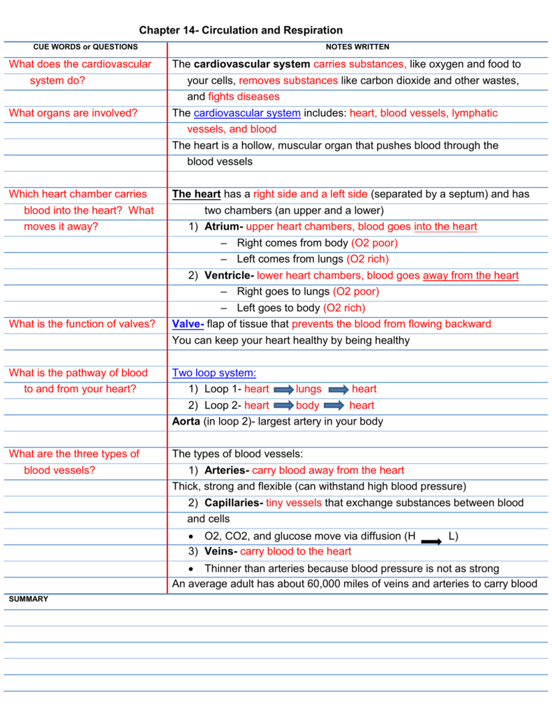 Chapter 14 Circulation And Respiration Cue Words Or