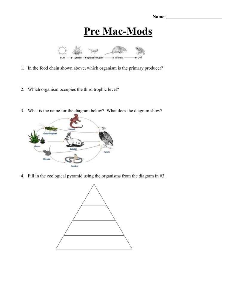 saltmarshfoodchainswebs – Ecological Pyramids Worksheet