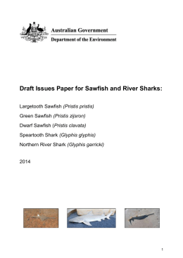 Draft Issues Paper for Sawfish and River Sharks