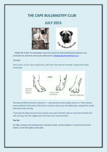 Newsletter July 2015 - Cape Bullmastiff Club