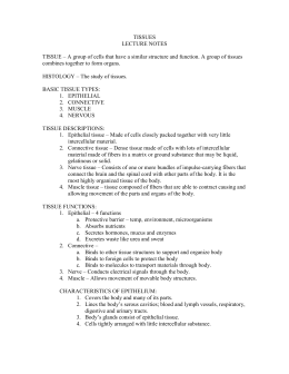 Printables of Tissue Worksheet Answer Key Section A Intro To ...