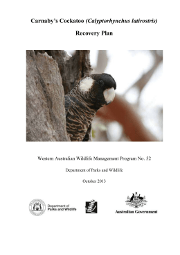 Carnaby`s Cockatoo (Calyptorhynchus latirostris) Recovery Plan