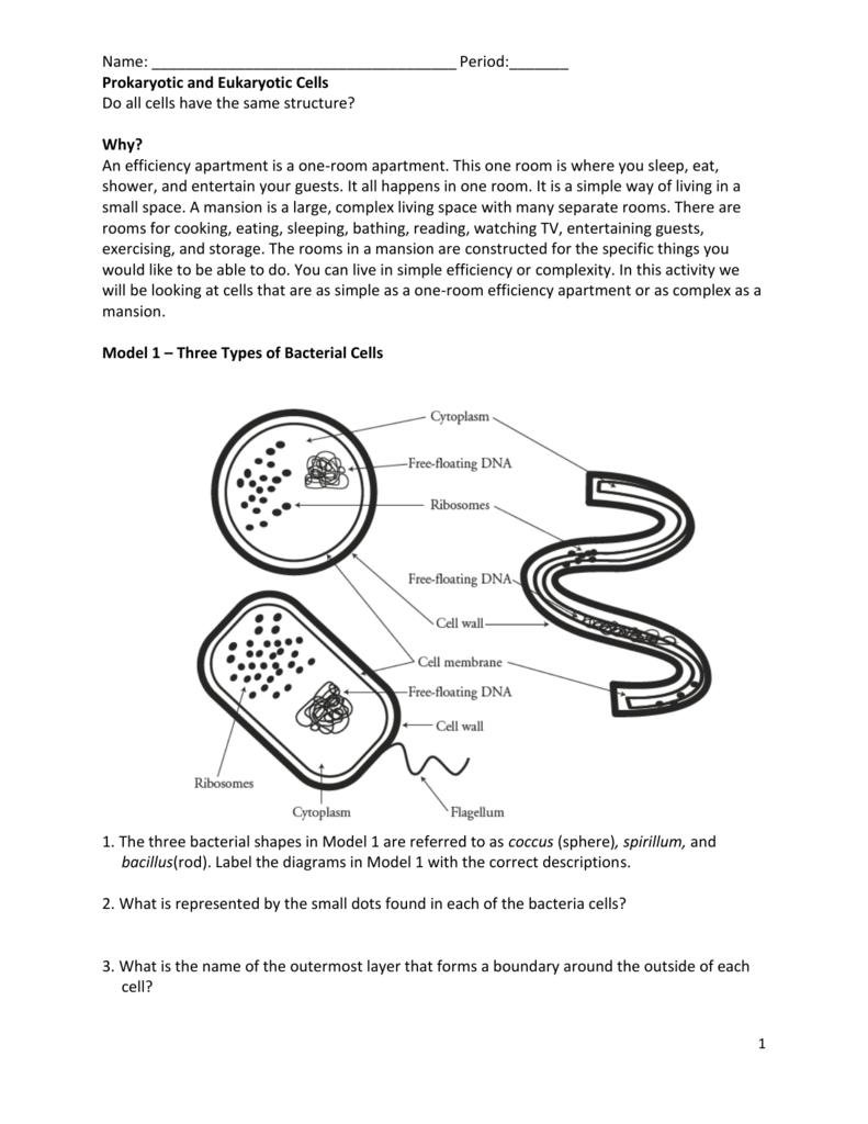Prokaryote and eukaryote worksheet ccuart Image collections