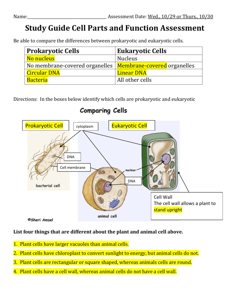 Cell Structure Test Study Guide