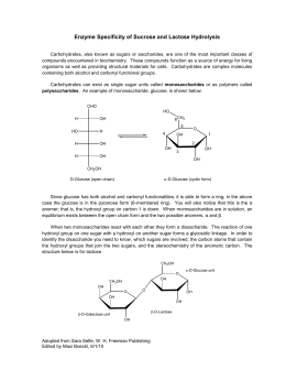 Enzyme Specificity of Sucrose and Lactose Hydrolysis