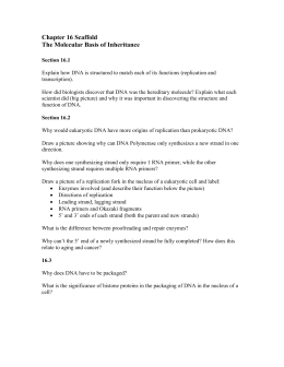 DNA replication worksheet - Watch the animations and answer