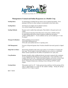 Management of Annual and Italian Ryegrasses