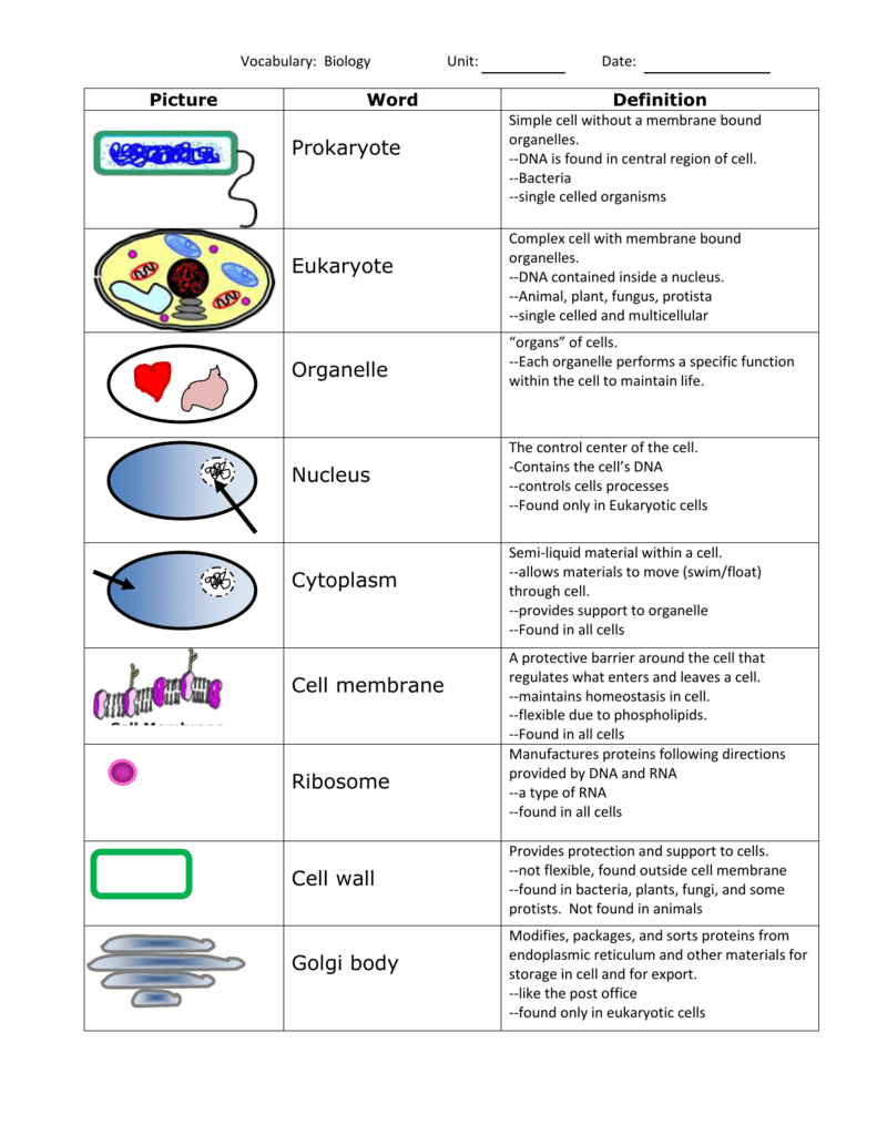 Unit 3-cells- vocabulary with definitions