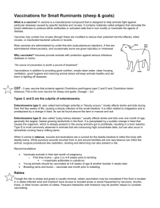 Vaccinations for Small Ruminants (sheep & goats)