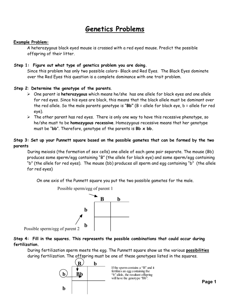 Genetics Worksheet Worksheets Releaseboard Free place value grade 2