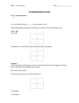 Punnett Square Worksheet 1