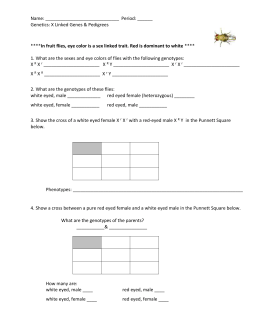 Sex Linked Traits Worksheet