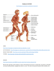 MUSCLE SYSTEM http://homepage.smc.edu/wissmann_paul