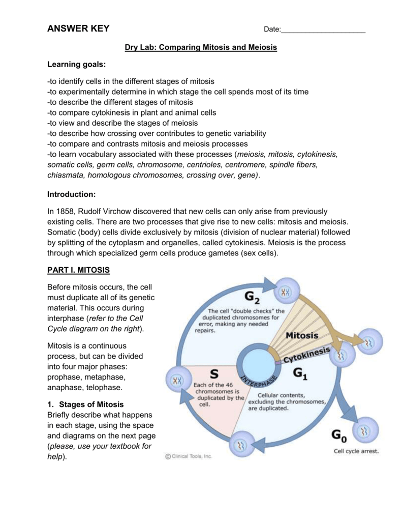 Worksheets Comparing Mitosis And Meiosis Worksheet Key mitosis vs meiosis worksheet lesson planet community forums 9th 12th grade worksheet