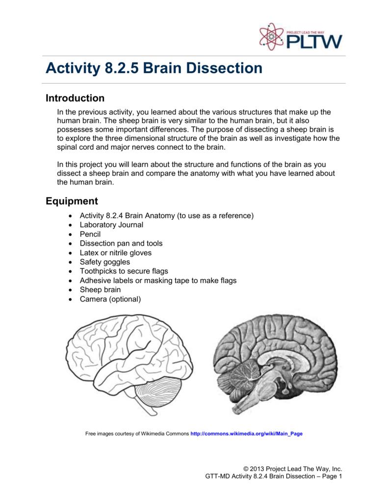 Brain Anatomy Worksheet Answer Key Brain Anatomy Worksheet Answer