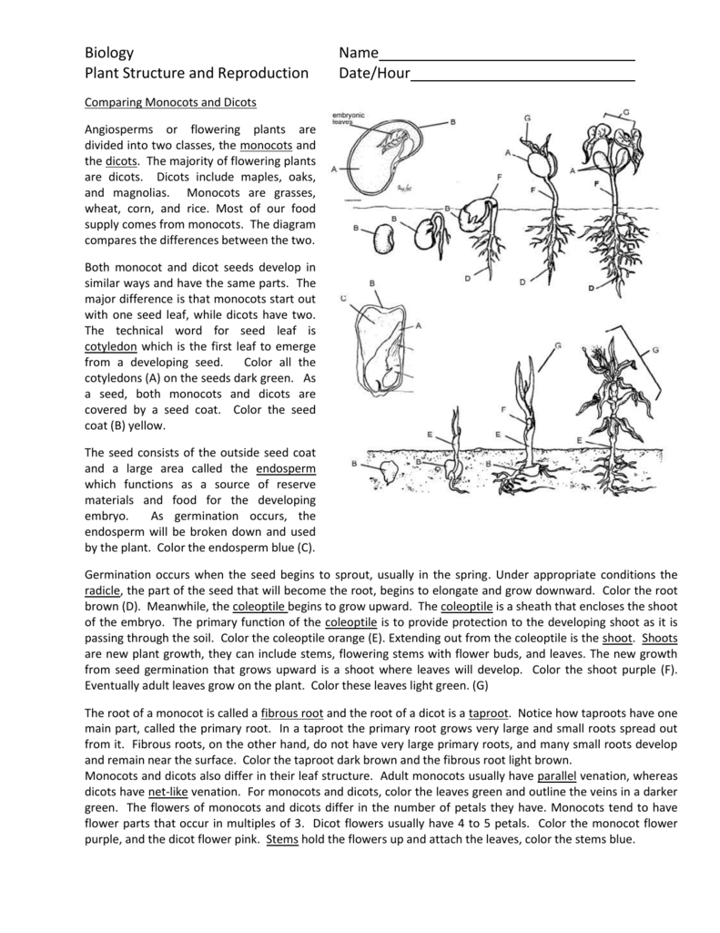 Plant structure and reproduction pooptronica