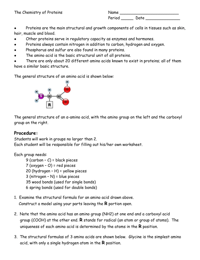 Protein model worksheet robcynllc Image collections