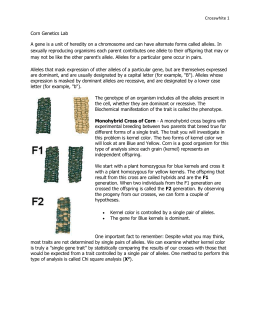 corn cob genetics lab report The separately bagged ears of corn were then shelled from the cob and then the grain samples were sent to the lab for glyphosate testing one of the samples tested to contain 13 ppm (the epa's legal limit of glyphosate in corn) of glyphosate residue, this was rr corn.
