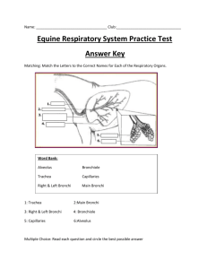 Practice Exam 4- Equine Respiratory System Answer Key