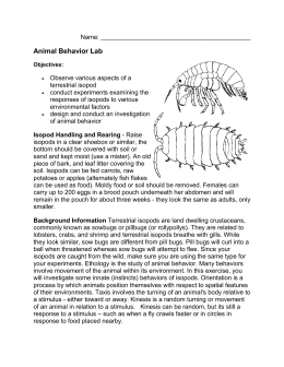 Isopod Behavior Lab