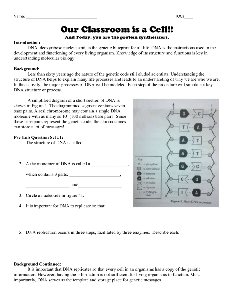 27 Decoding Mrna Worksheet Answers - Notutahituq Worksheet ...