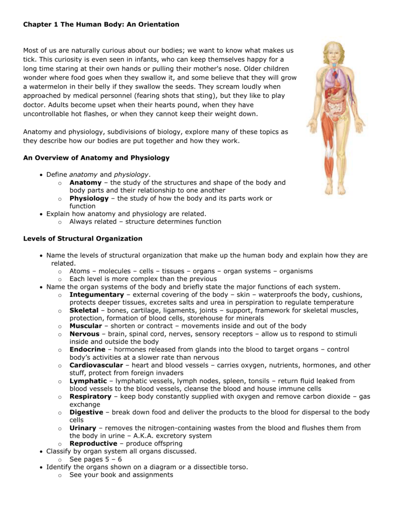 Chapter 1 The Human Body An Orientation
