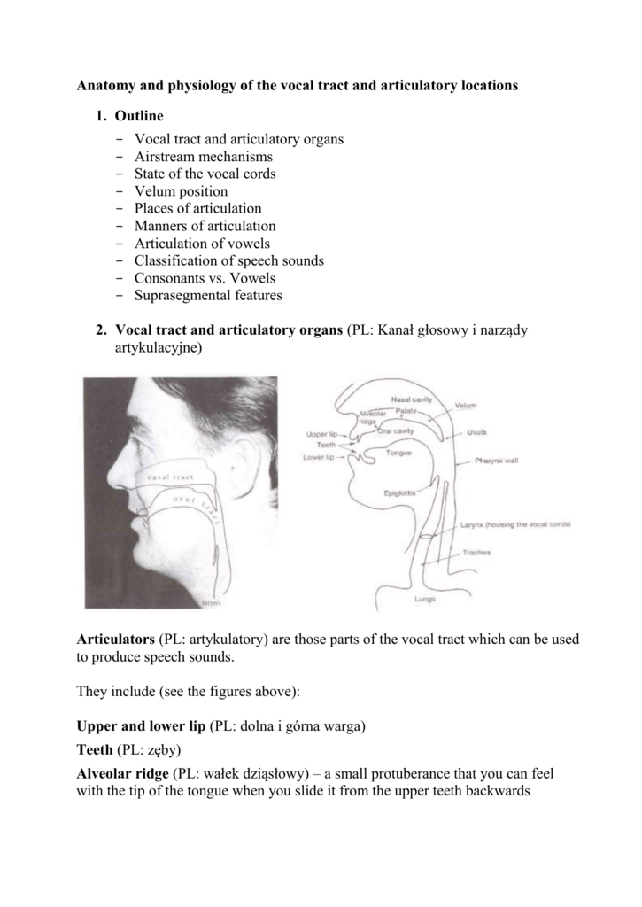 Anatomy and physiology of the vocal tract and articulatory locations.