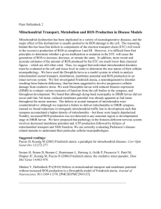 Mitochondrial Transport, Metabolism and ROS Production in