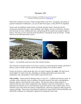 Oysters 101 Peter Frederick, Department of Wildlife Ecology and