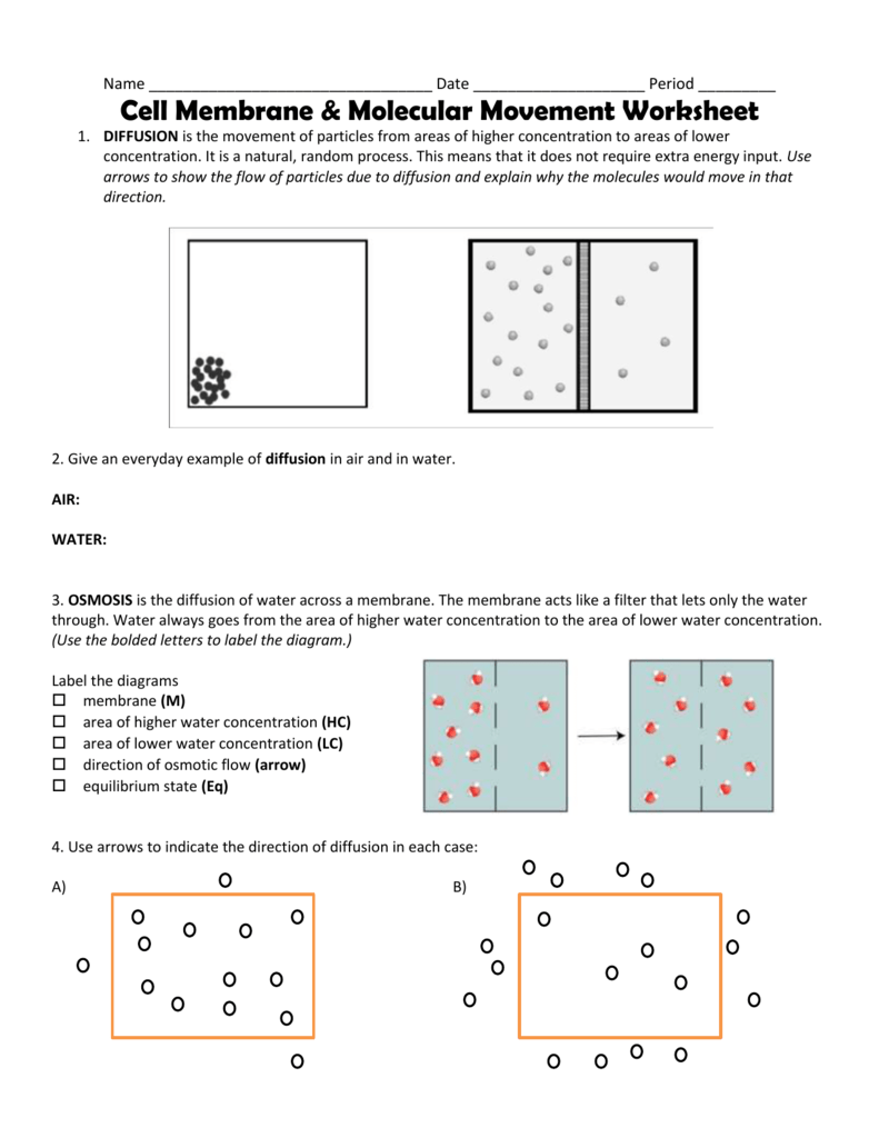 Cell membrane and transport worksheet answers biology corner